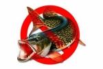 до какого числа запрещено ловить спиннингом