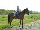 Прогулки на лошадях-Шатура