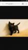 Ищет дом котёнок