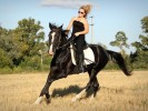 Лошади-Шатура